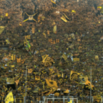 yellow wall borussia